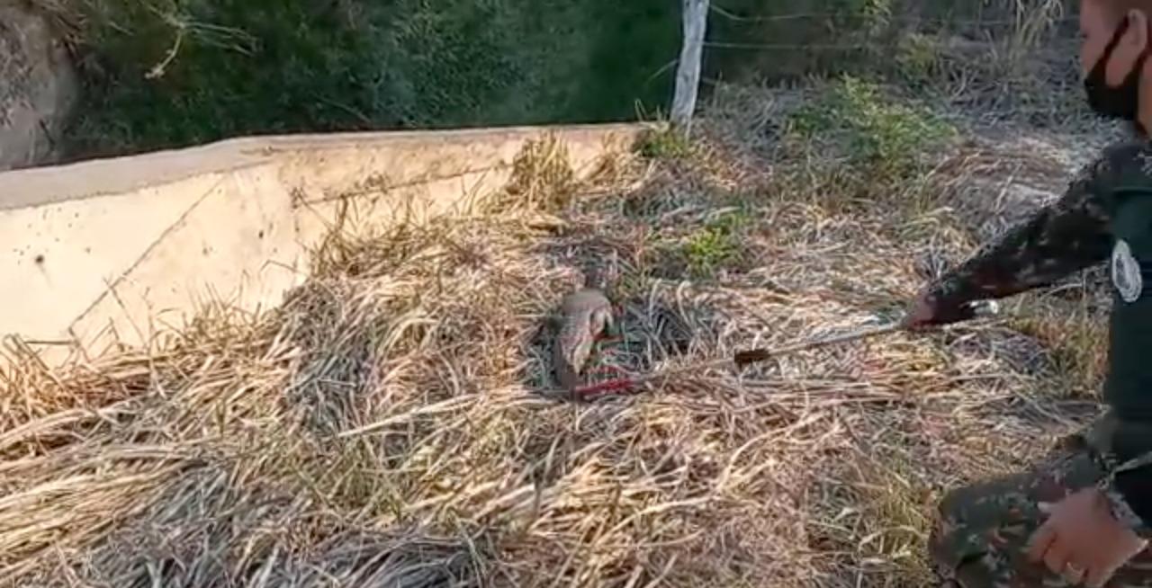 Momento em que policial ambiental devolveu o jacaré à natureza